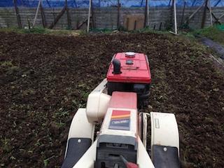 トマト畑作り_140308
