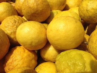 ニューサマーオレンジ収穫_140419