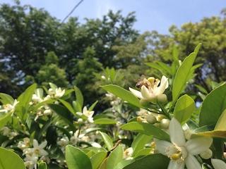 ニューサマー花みつ1